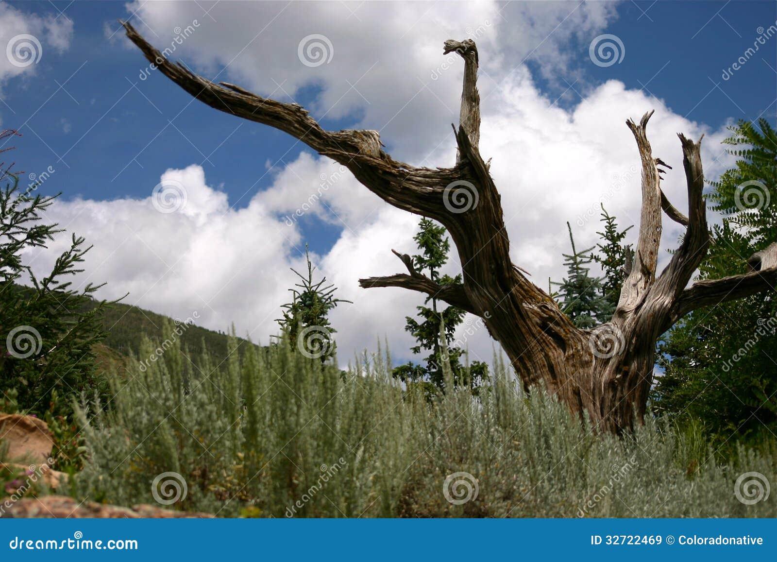 Arbre mort dans un jardin de montagne image stock image for Jardin 2 montagnes