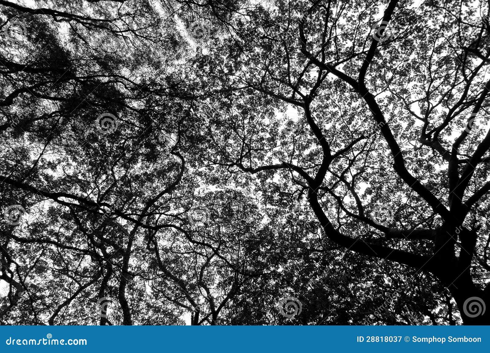 arbre noir et blanc image stock image du saisonnier 28818037. Black Bedroom Furniture Sets. Home Design Ideas