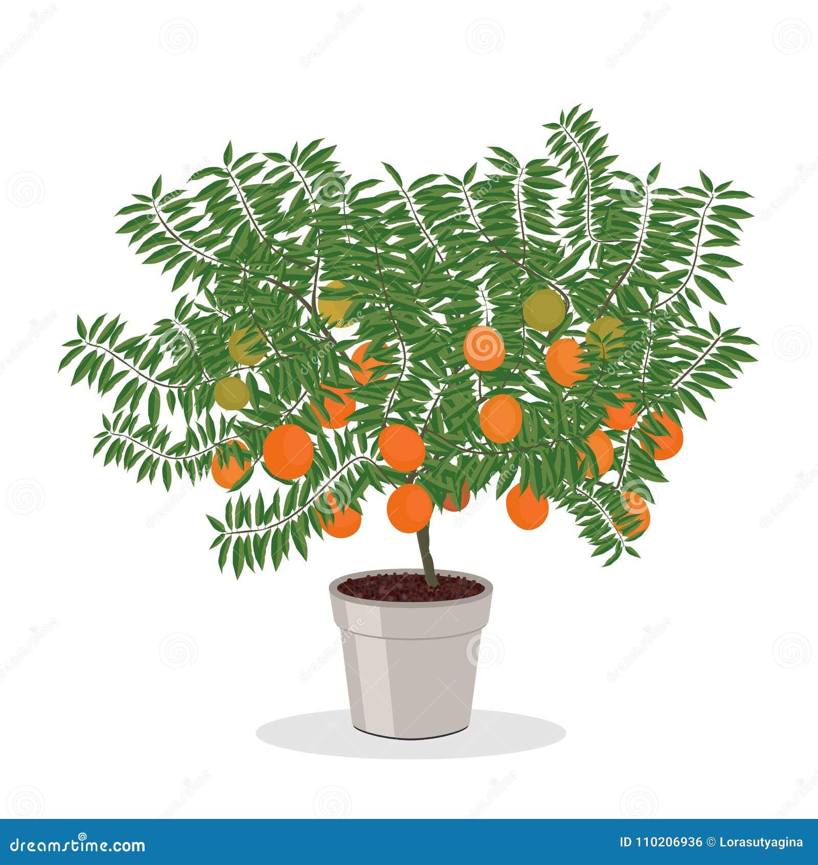 arbre orange s 39 levant dans l 39 illustration d 39 arbre fruitier de pot illustration de vecteur. Black Bedroom Furniture Sets. Home Design Ideas