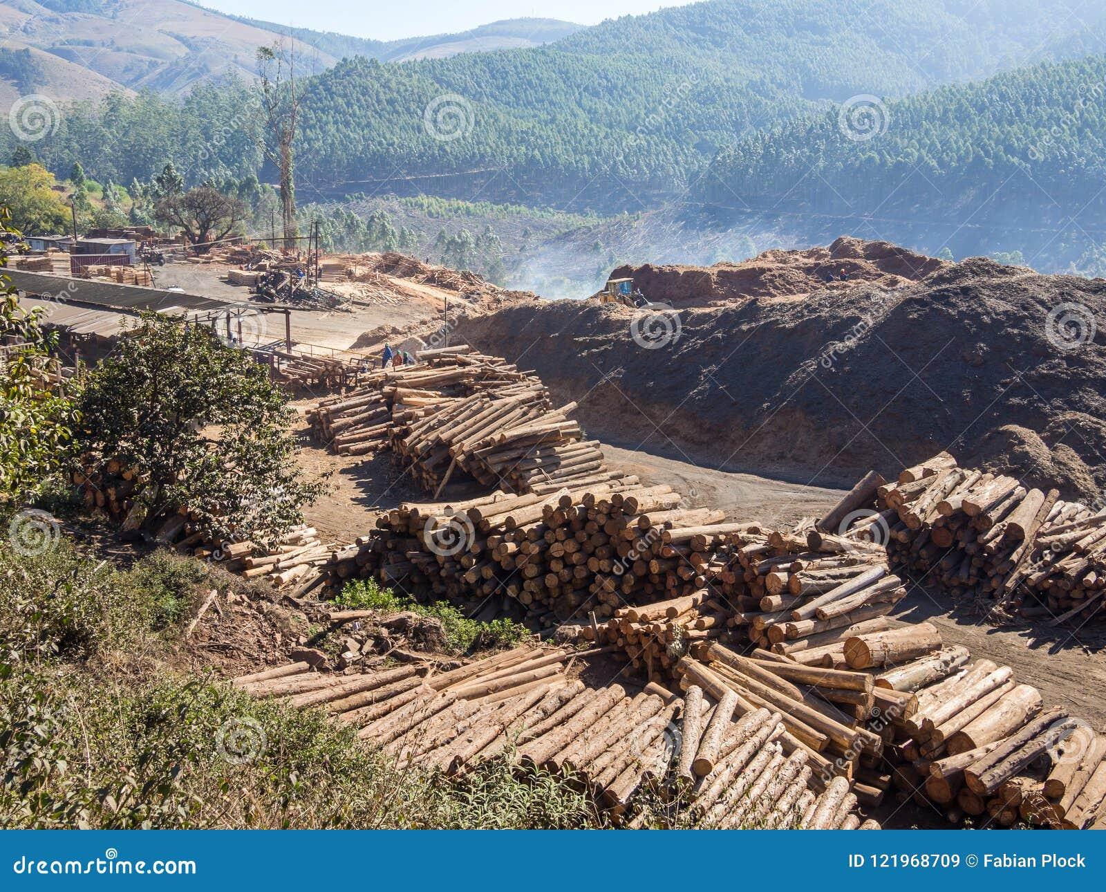 Arbre ouvrant une session le Souaziland rural avec les machines lourdes, le bois de construction empilé et la forêt à l arrière-p