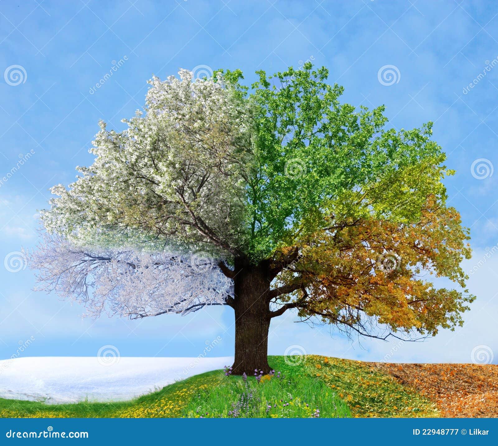 arbre quatre saisons image stock image du lame jardin 22948777. Black Bedroom Furniture Sets. Home Design Ideas