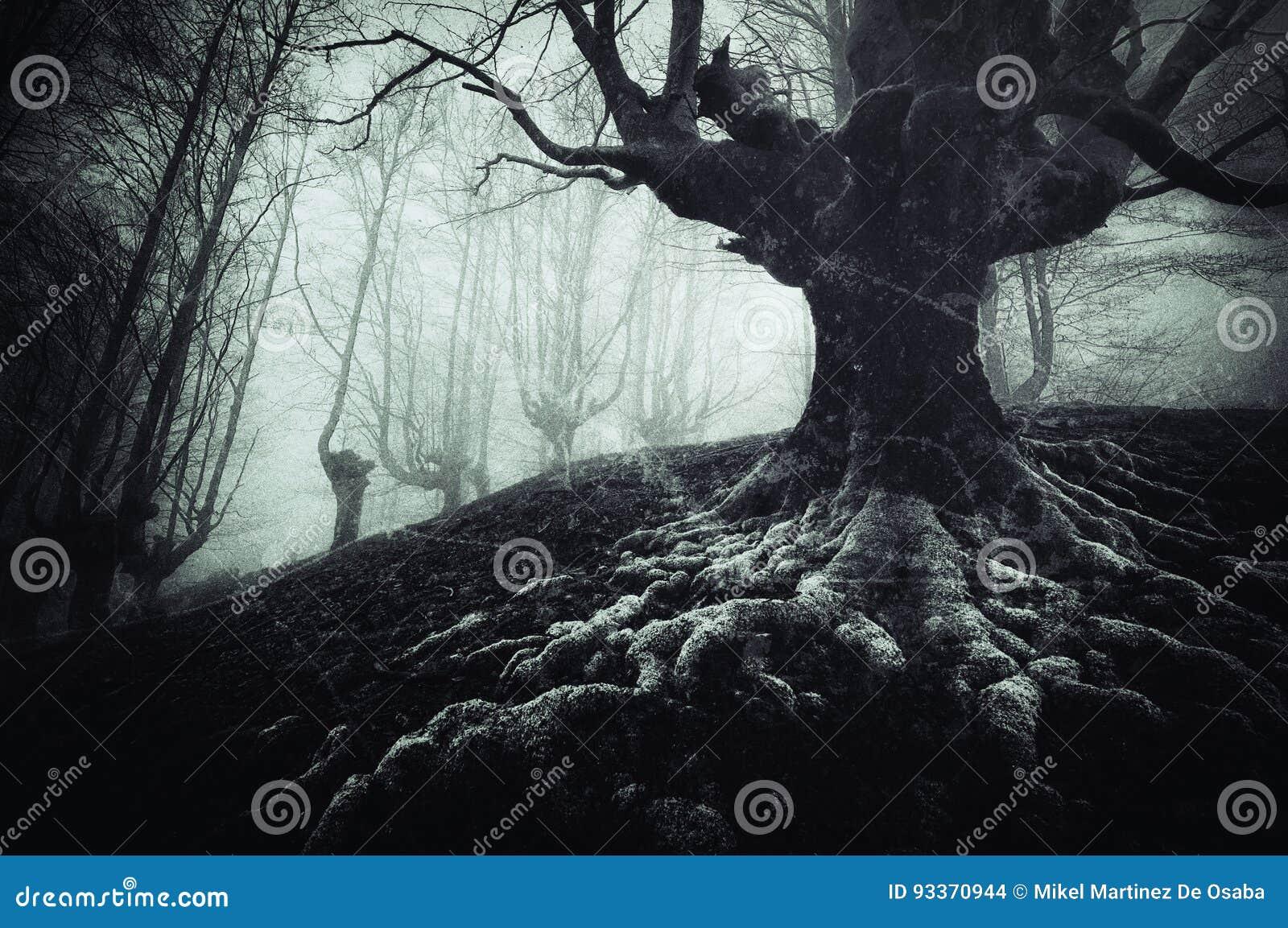 Arbre rampant avec les racines tordues et les textures sales