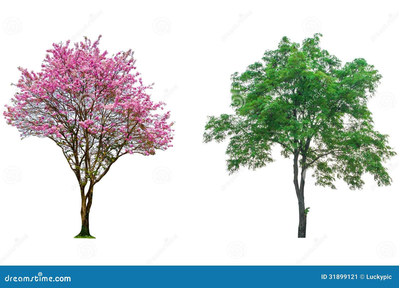 arbre rose de fleur image stock image 31899121. Black Bedroom Furniture Sets. Home Design Ideas