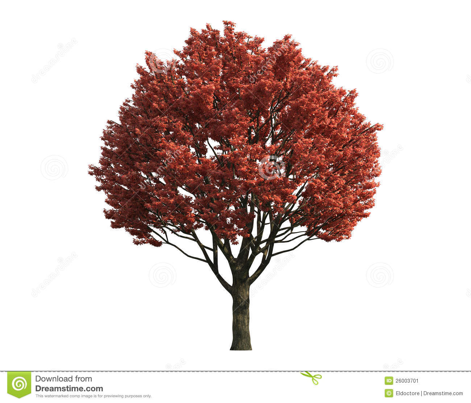Arbre rouge d 39 isolement sur un fond blanc image stock for Arbol rojo jardin