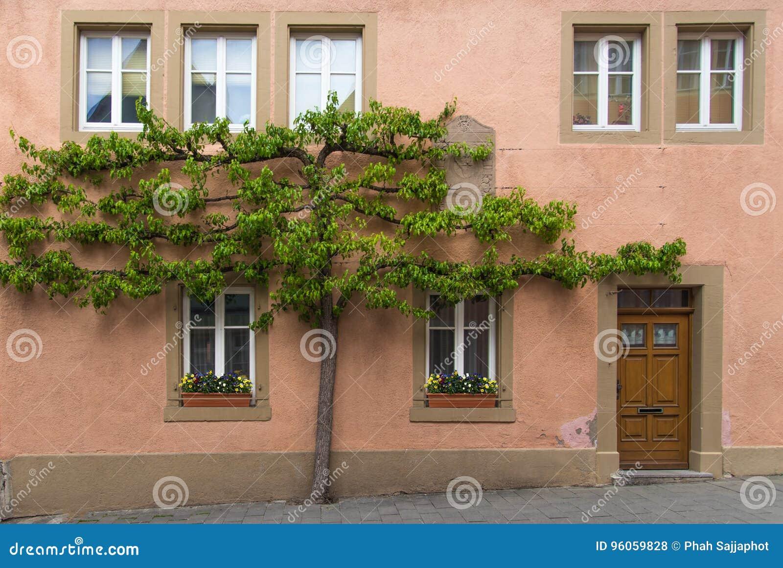 Arbre s élevant sur le mur avec la porte et des fenêtres en Europe