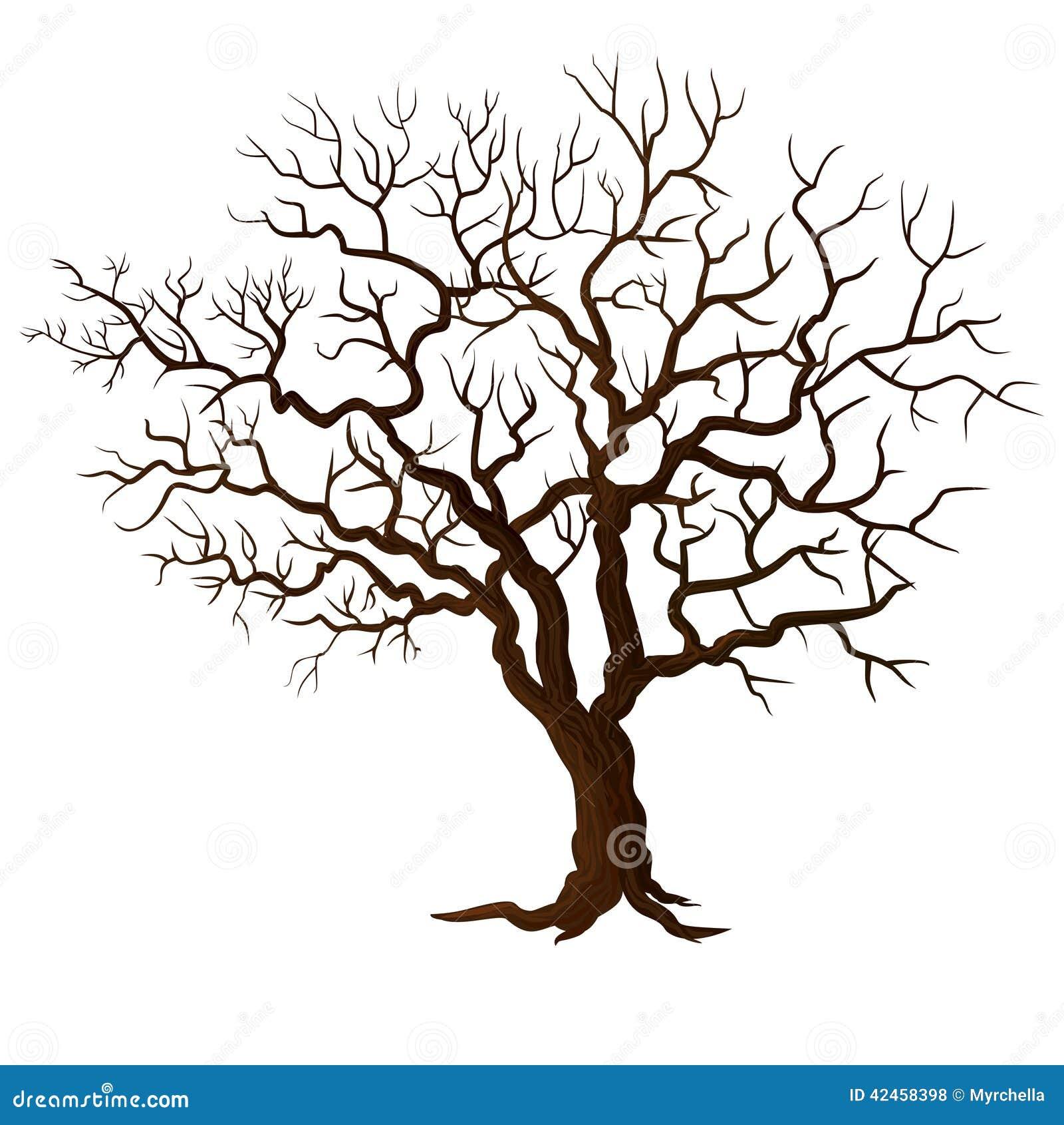 Arbre sans feuilles d 39 isolement sur le blanc photo stock - Arbres sans feuilles ...