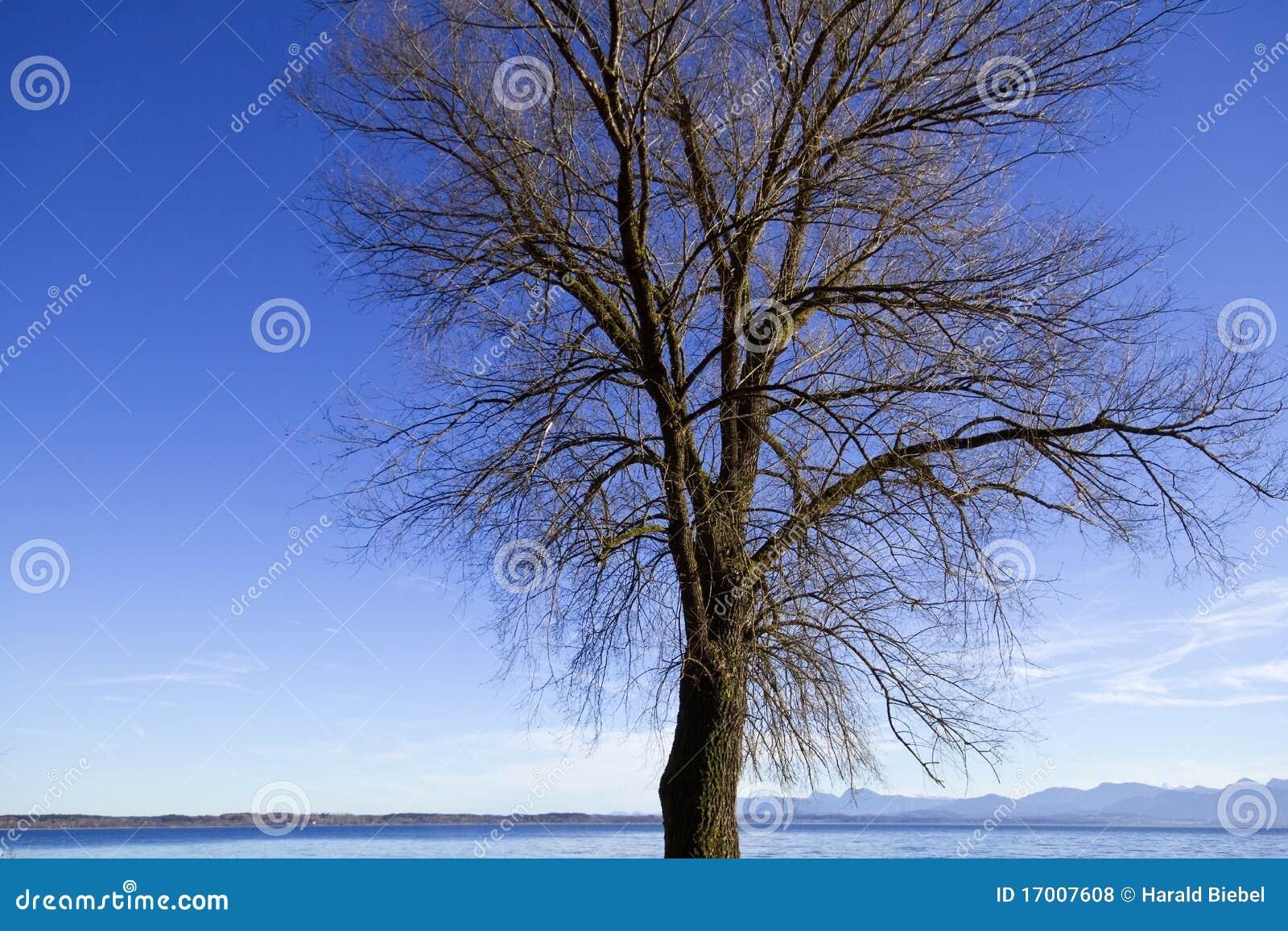 Arbre sans feuilles en automne photos libres de droits - Arbres sans feuilles ...