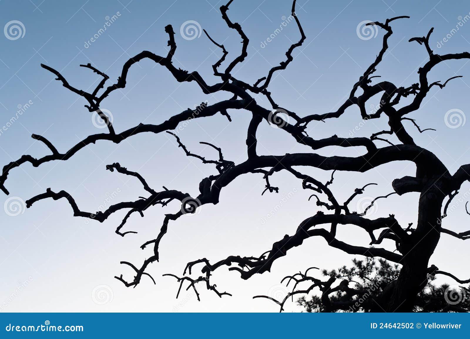 Arbre sans feuilles en hiver photographie stock image - Arbres sans feuilles ...