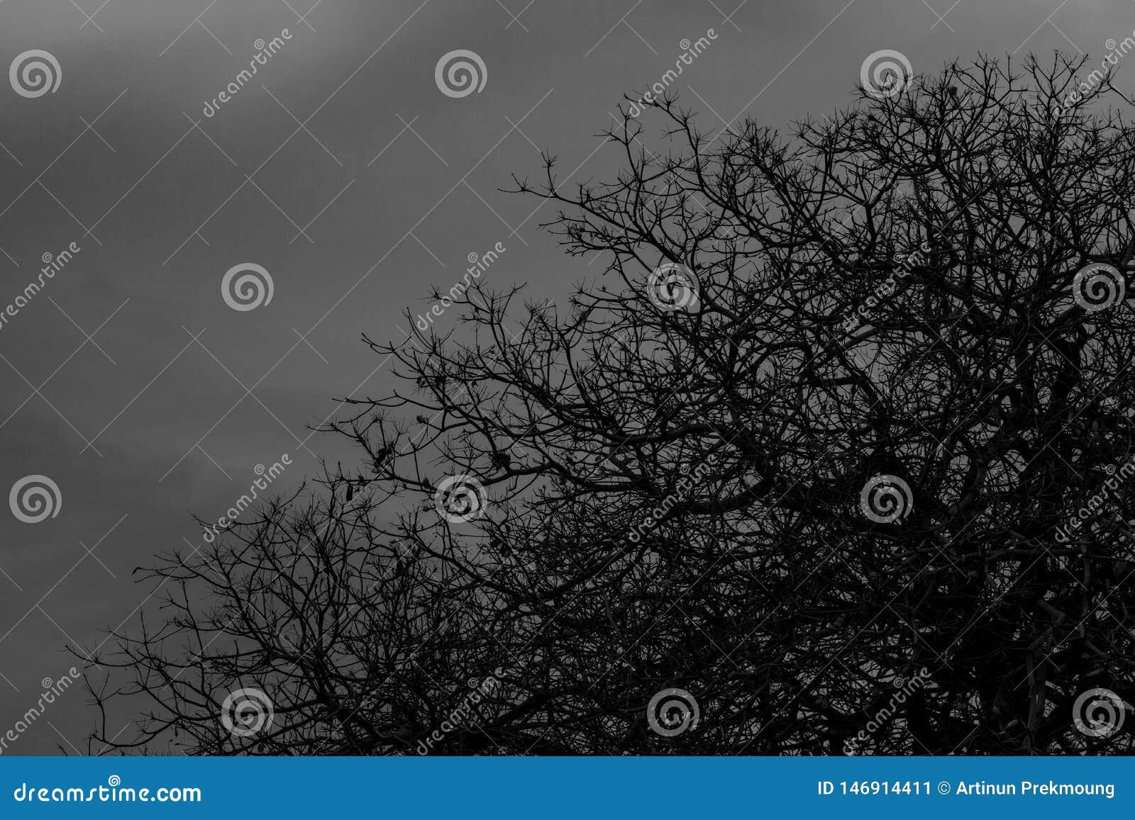 Arbre sans feuilles Arbre mort de silhouette sur le fond dramatique foncé de ciel et de nuages pour effrayant ou la mort Fond de