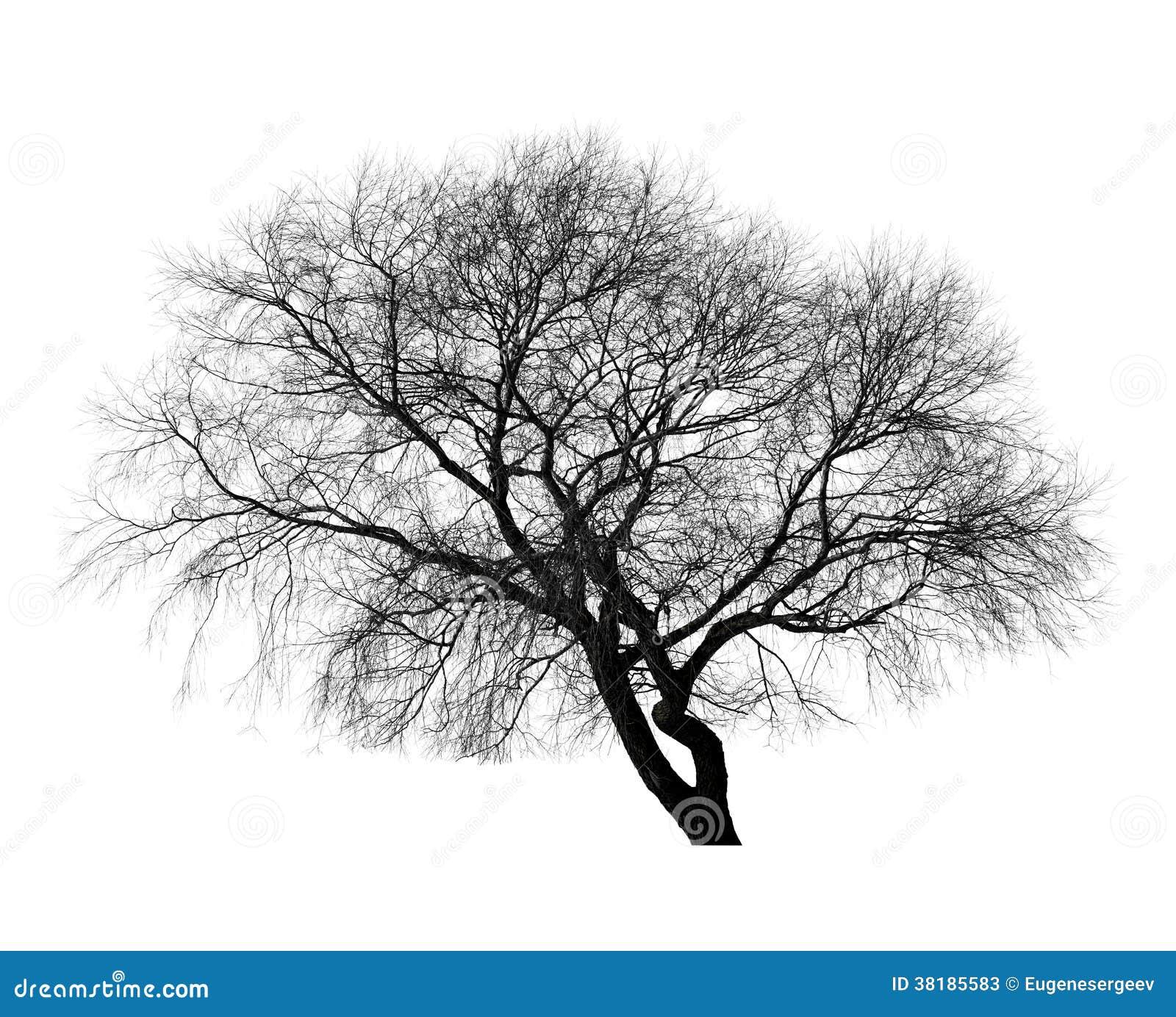 arbre sans feuilles noir sur le fond blanc image stock image du silhouette leafless 38185583. Black Bedroom Furniture Sets. Home Design Ideas