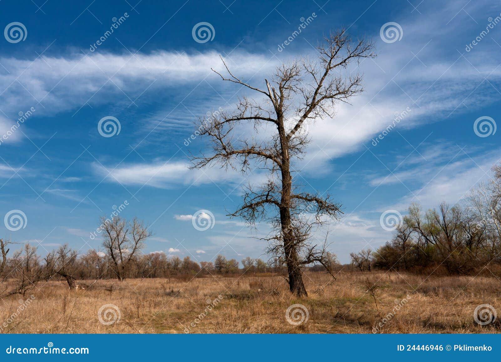 Arbre sans feuilles sur le pr image libre de droits - Arbres sans feuilles ...