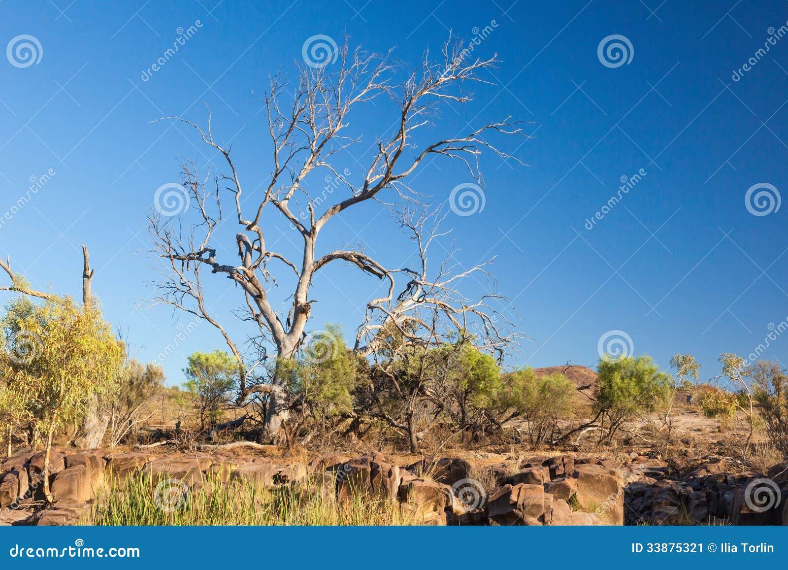 Arbre sec. Chaînes de Flinders. Australie du sud