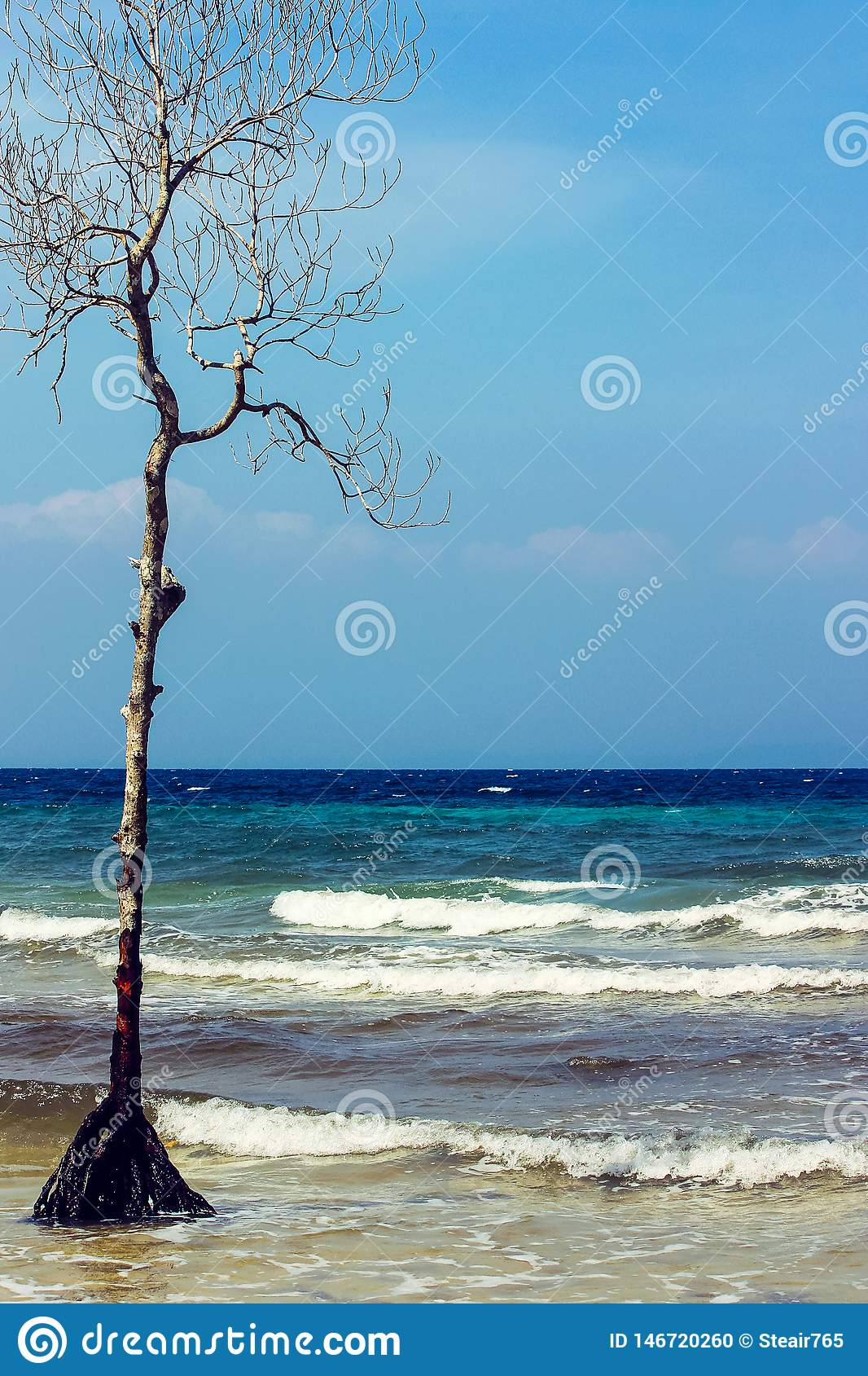 Arbre sec se levant de la mer