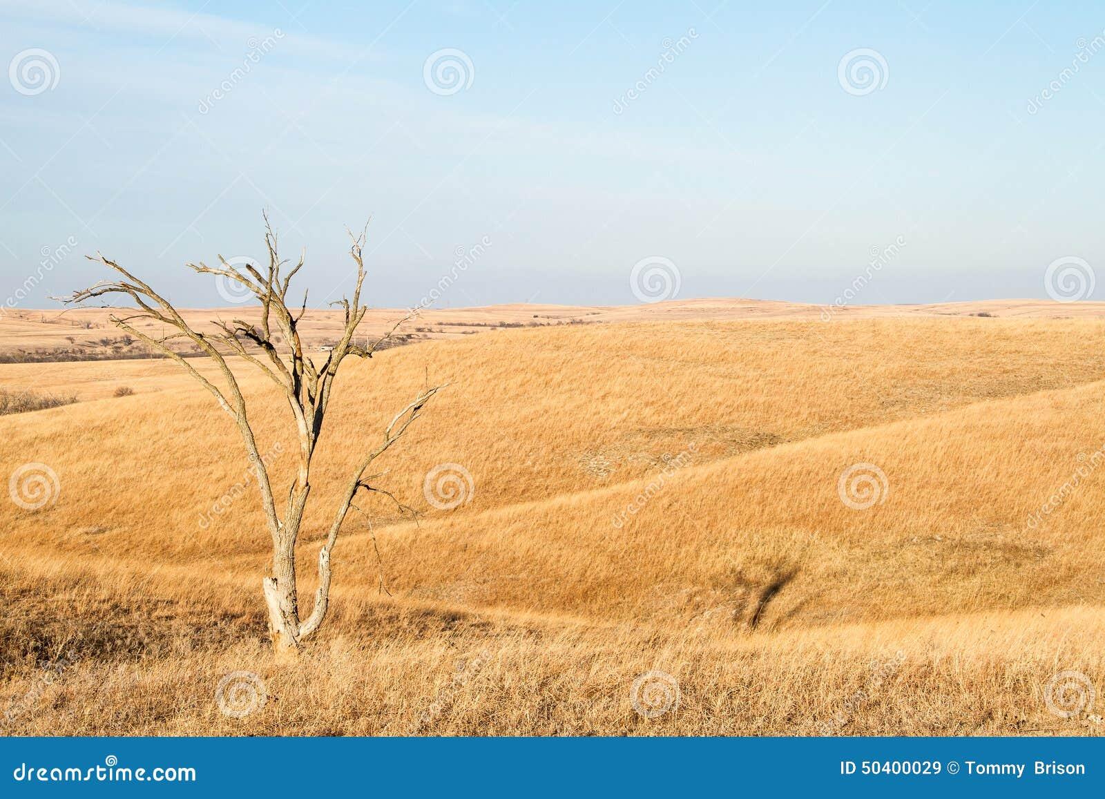 Arbre solitaire en Flint Hills du Kansas