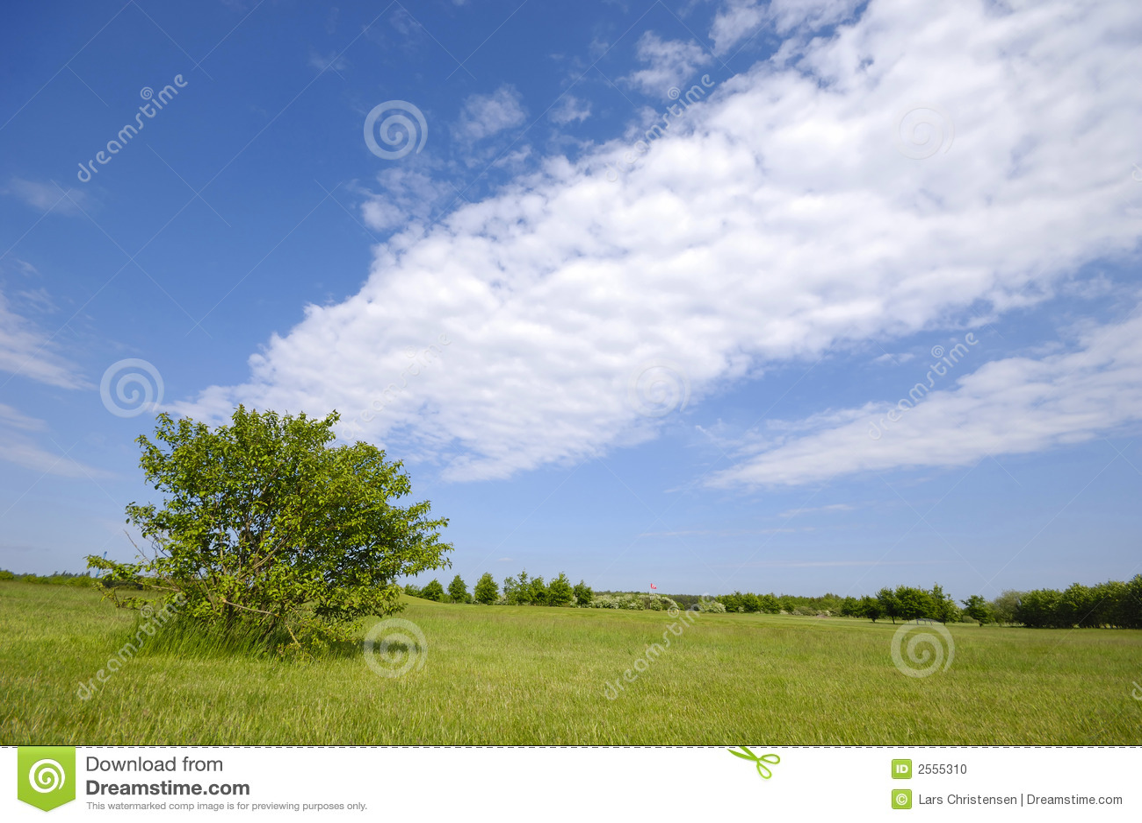 Arbre sur la zone verte