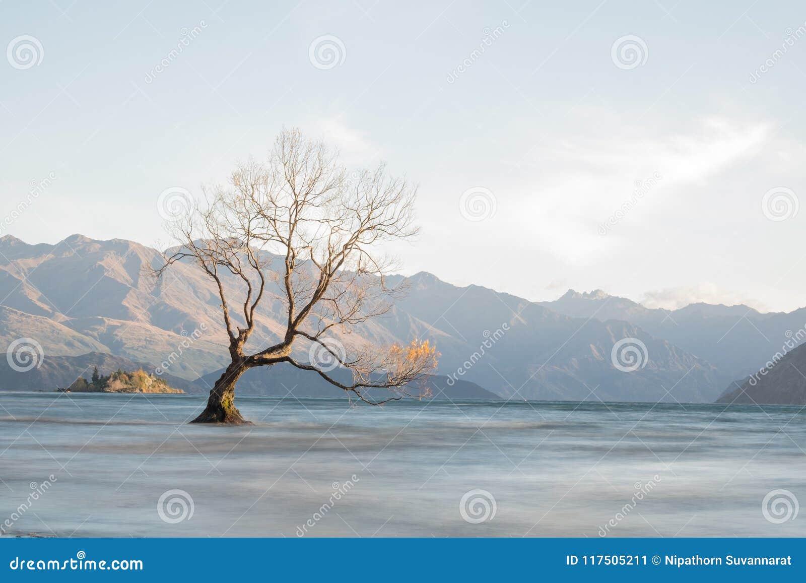 Arbre sur le wanaka de lac