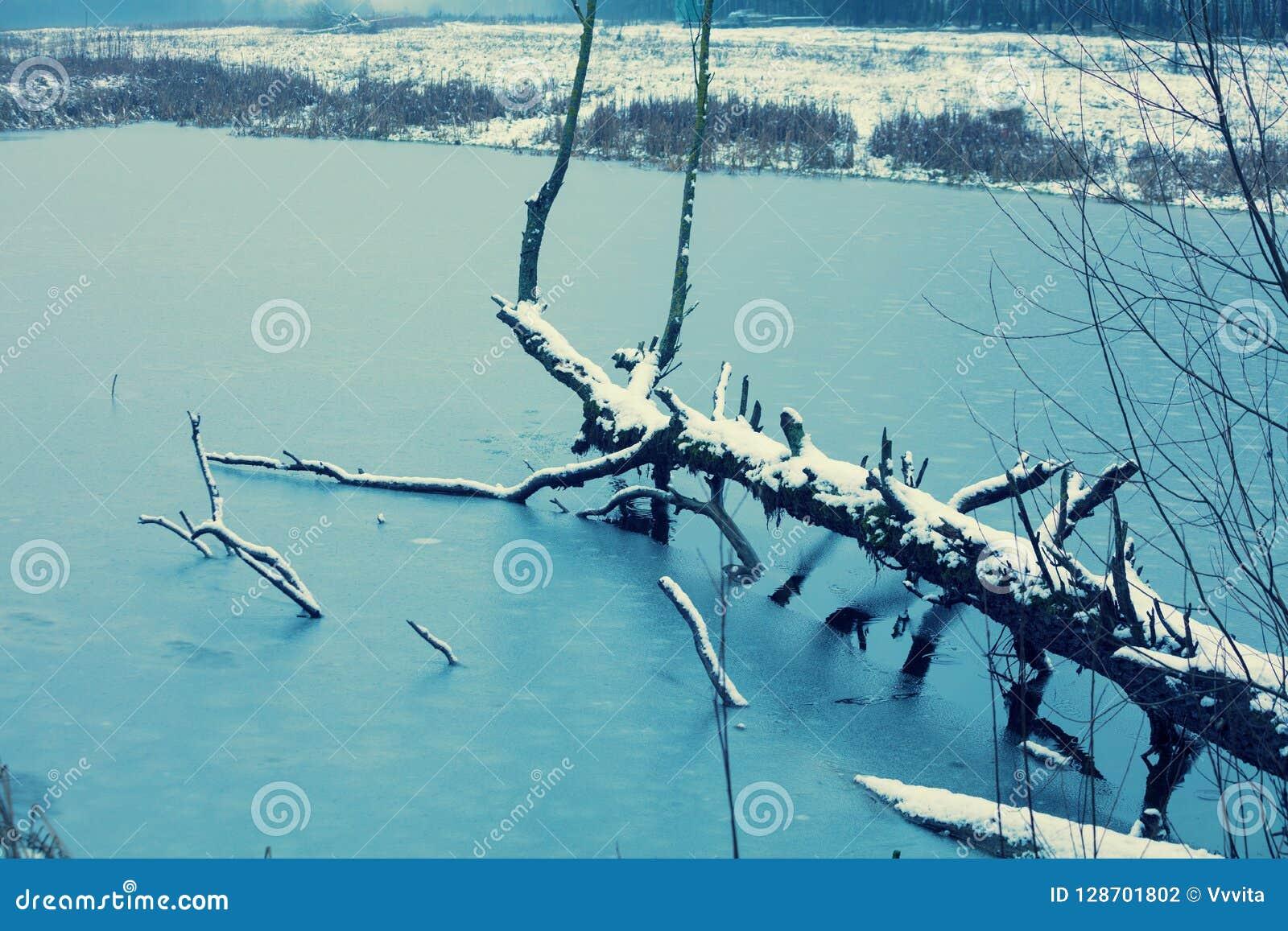 Arbre tombé dans le lac congelé
