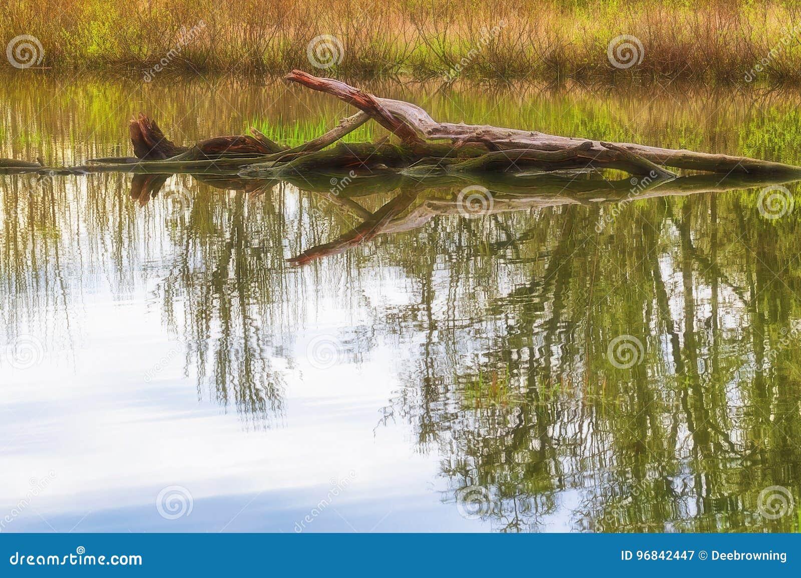 Arbre tombé dans un étang