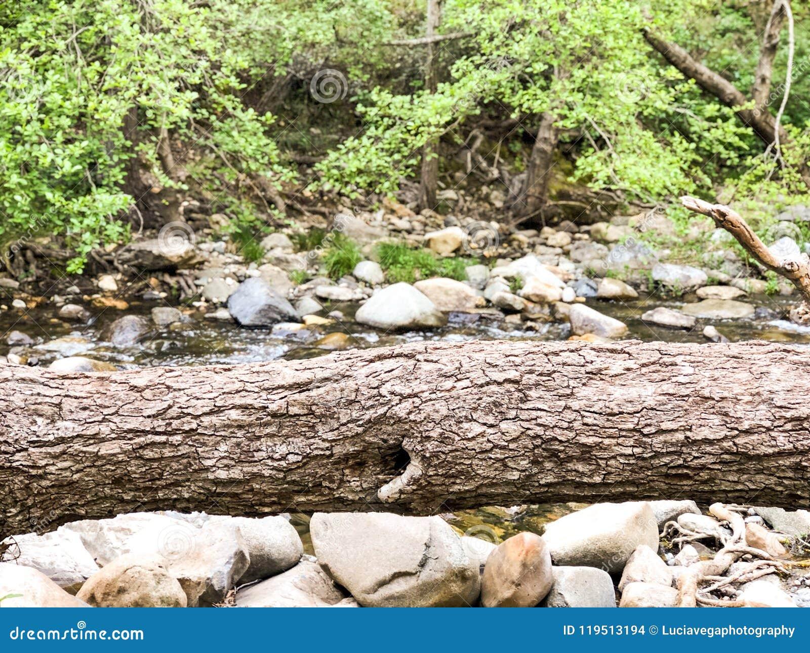 Arbre tombé en rivière