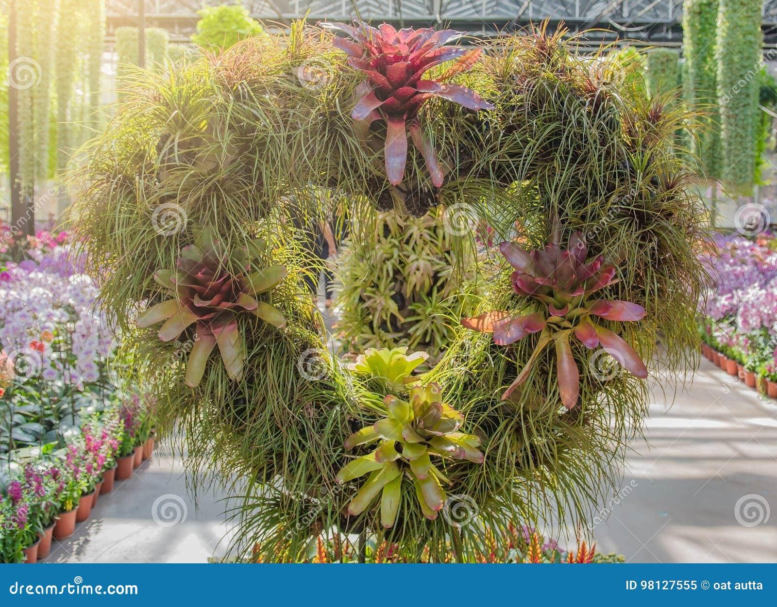 Arbre Vert Accrochant En Forme De Coeur Dans La Décoration De Jardin ...
