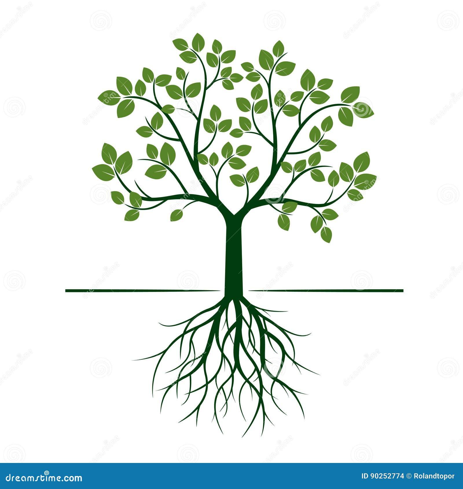 arbre vert avec des racines et des feuilles illustration de vecteur illustration de vecteur. Black Bedroom Furniture Sets. Home Design Ideas