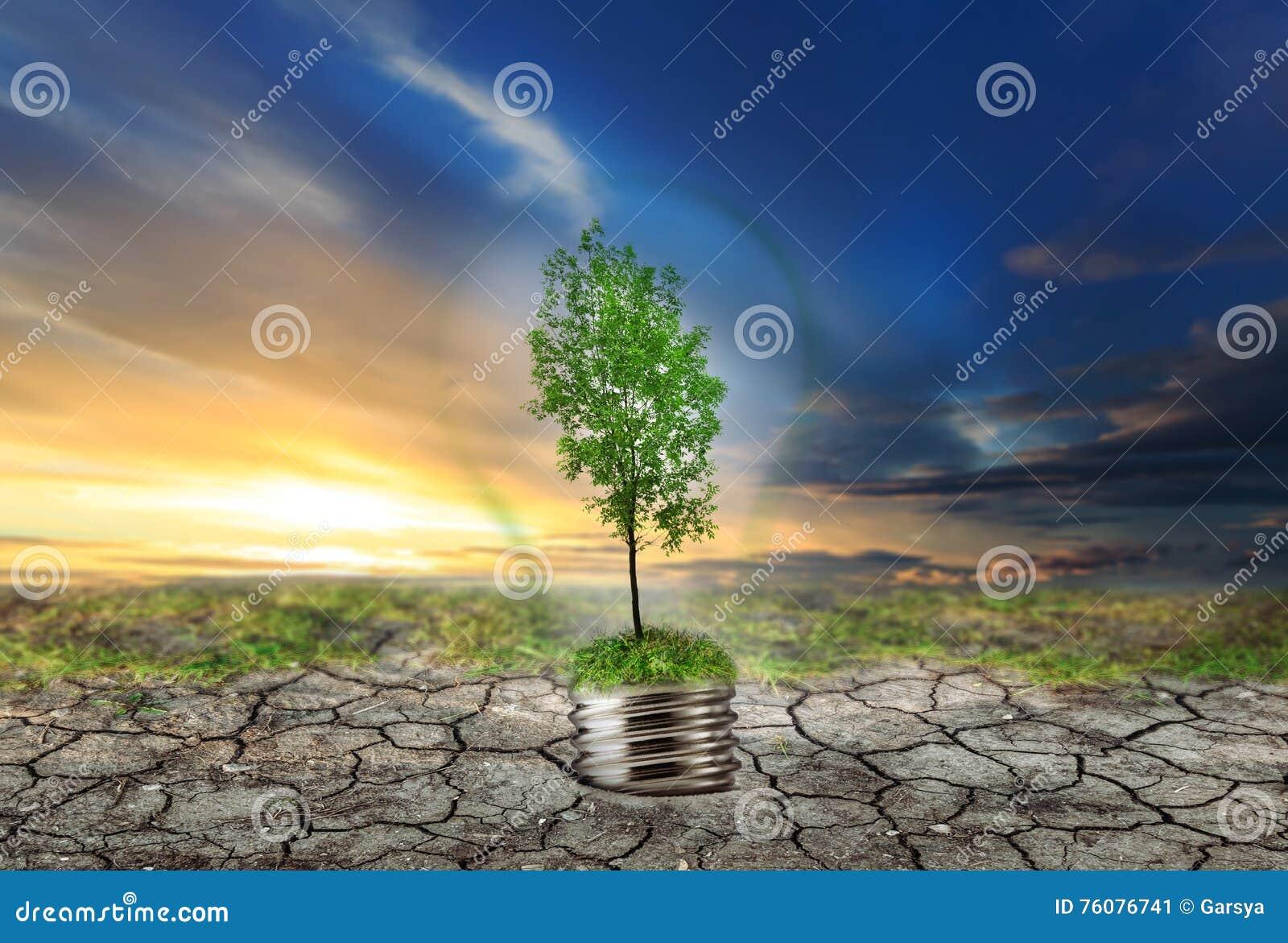 Arbre vert dans la lampe sur le sol sec