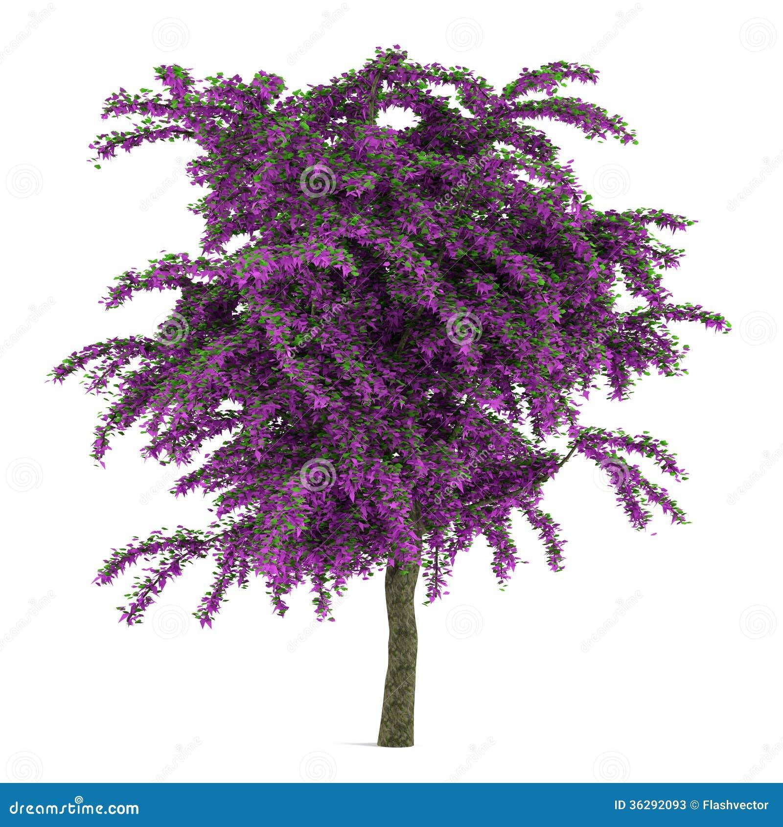 arbre violet exotique de fleur d'isolement. illustration stock