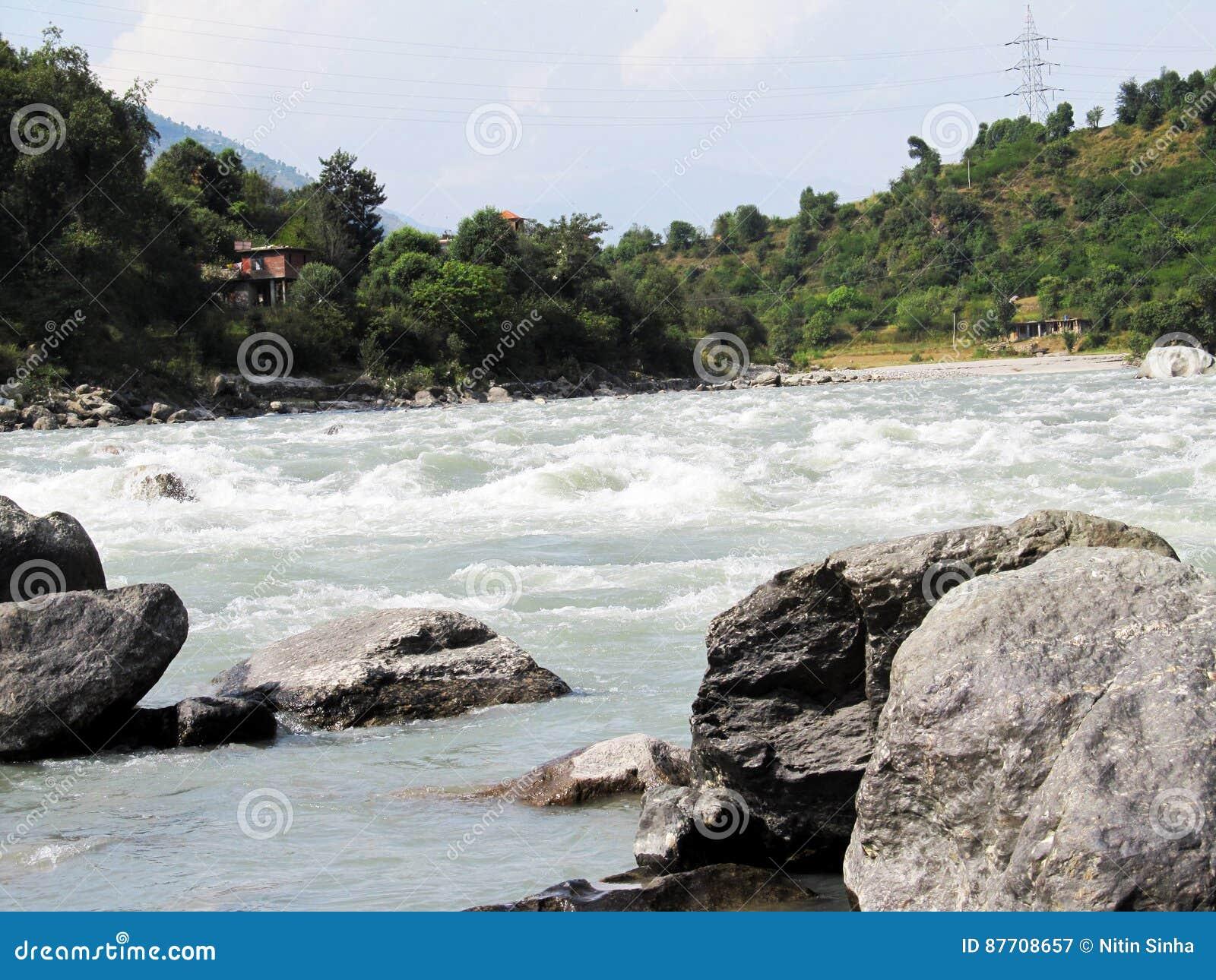 Arbres à côté de fleuve