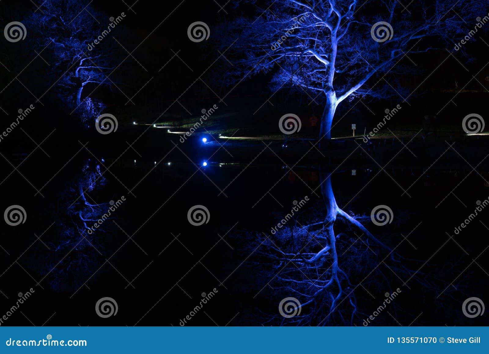 Arbres éclairés bleus en hiver