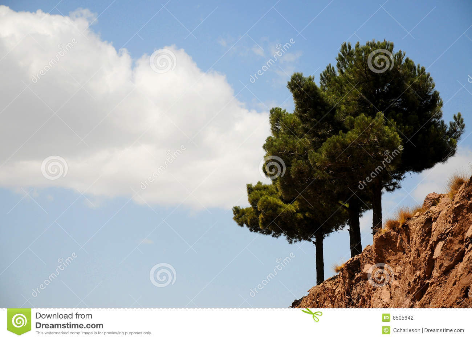 Arbres Bleus De Ciel De Nuage Photographie Stock Image 8505642
