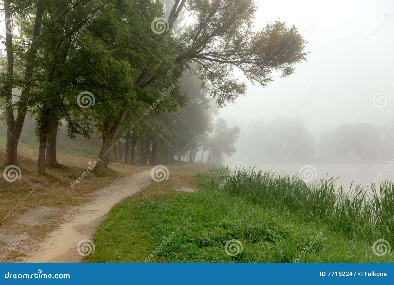 Arbres brumeux en parc