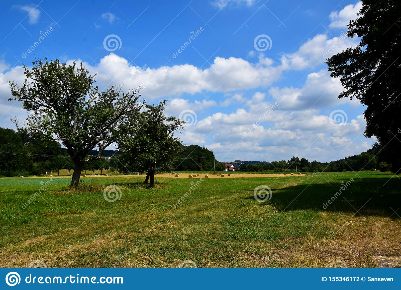 Arbres, champs, prés et un ciel ensoleillé bleu