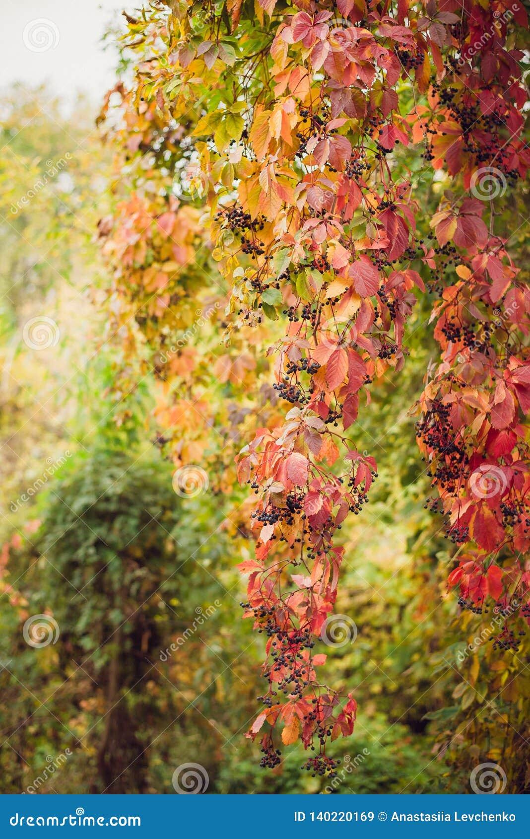 Arbres colorés de paysage d automne beaux au-dessus de la rivière, rougeoyant au soleil fond pittoresque merveilleux Couleur en n