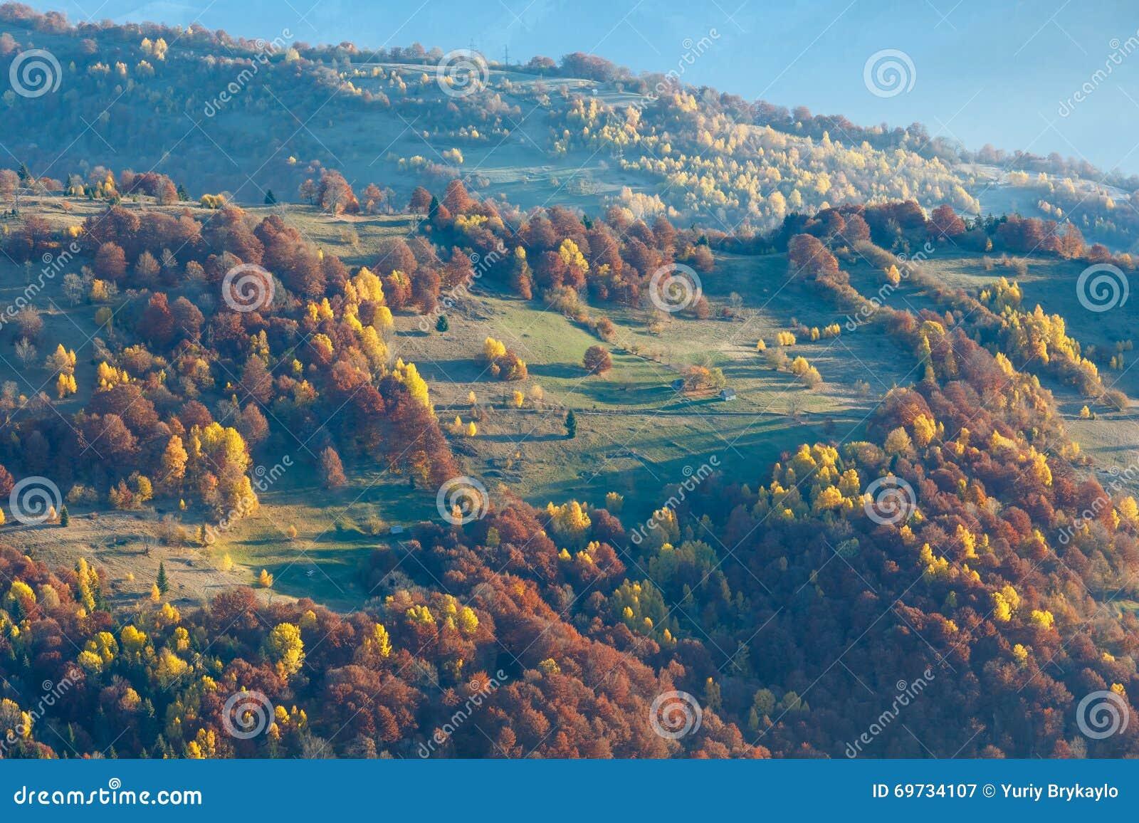 Arbres colorés sur la pente en automne carpathien