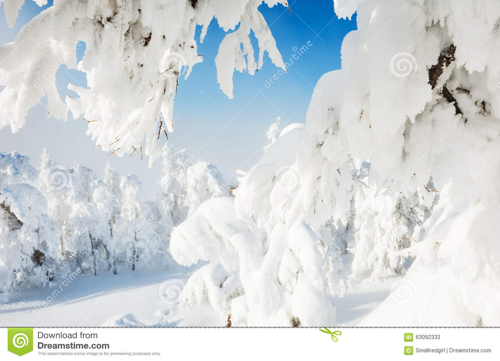 Download Arbres Couverts De Neige Dans La Forêt D'hiver Image stock - Image du horizontal, scénique: 63092333