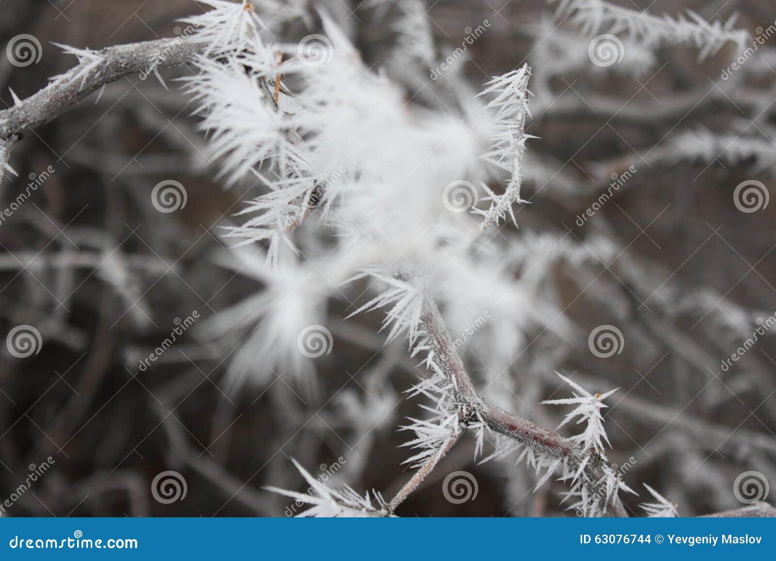 Download Arbres Couverts De Neige Dans Le Désert Photo stock - Image du congelé, leann: 63076744