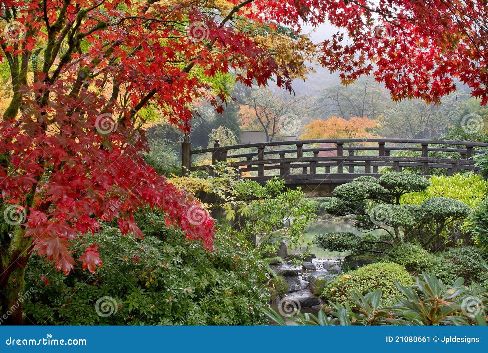 Arbres D\'érable Japonais Par La Passerelle Dans L\'automne Image ...
