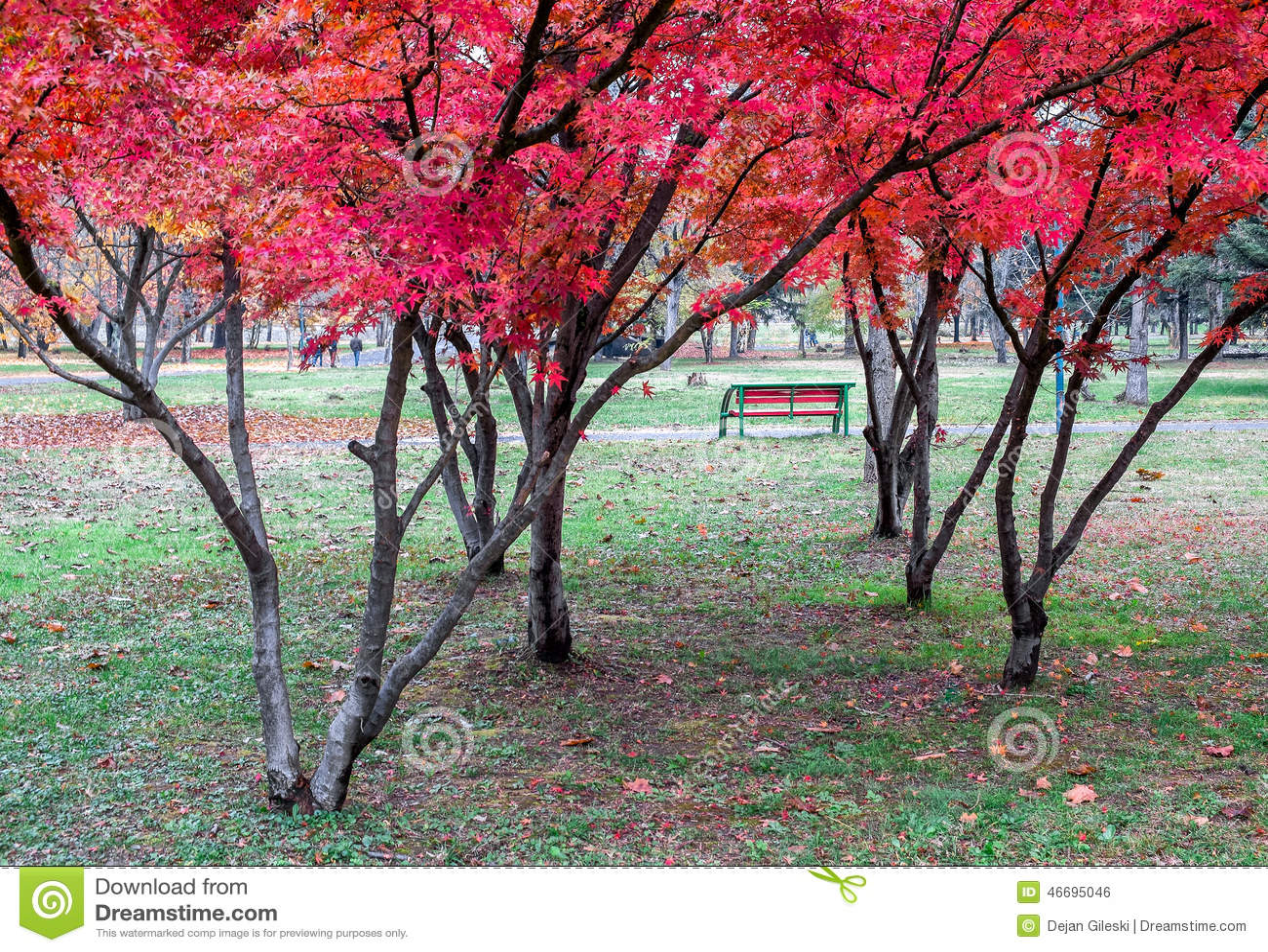 arbre a feuille rouge. cool main tenant une feuille rouge jusqu un