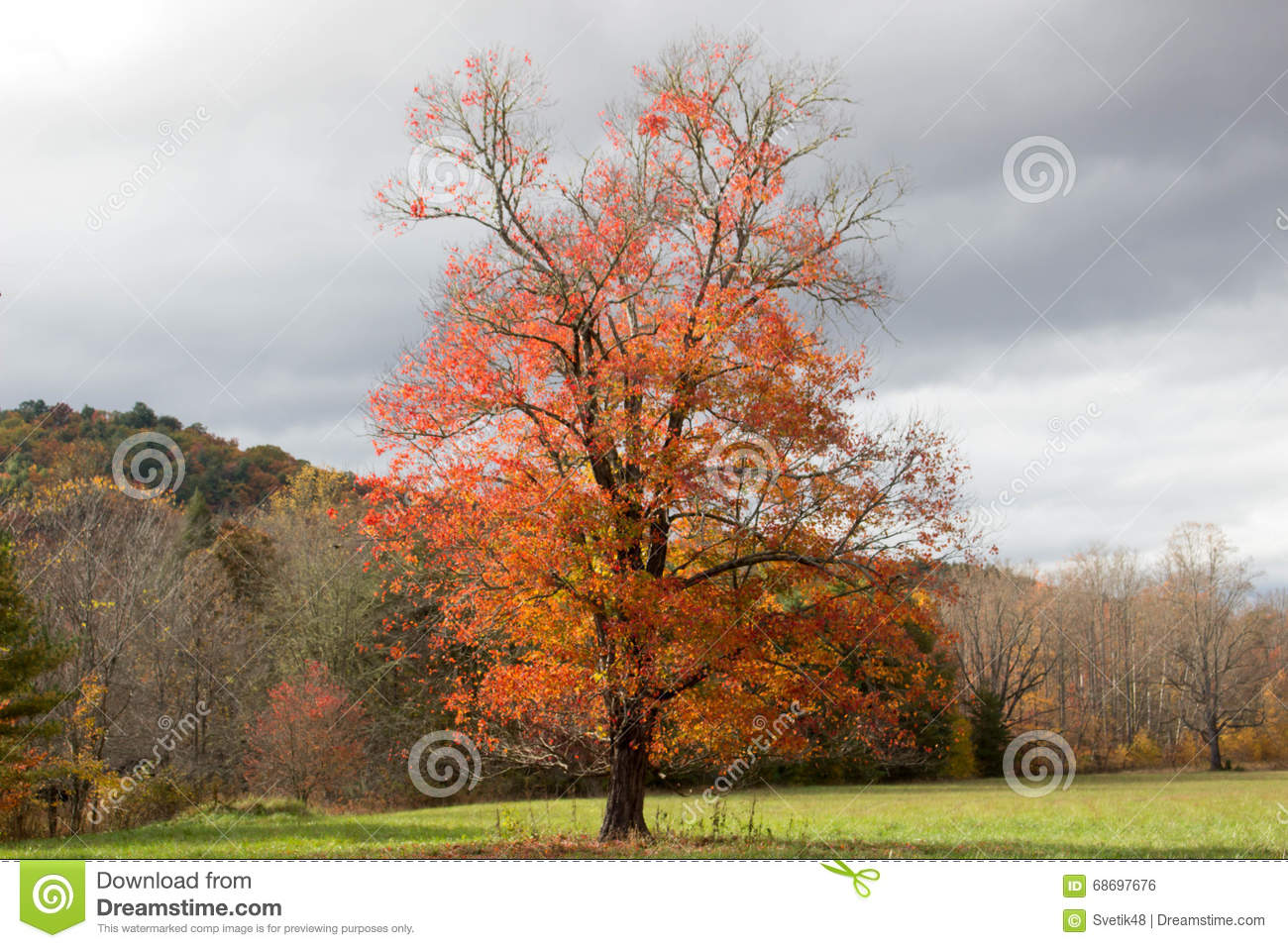 arbres d 39 automne dans un jour nuageux tennessee photo stock image du surplomber sc nique. Black Bedroom Furniture Sets. Home Design Ideas