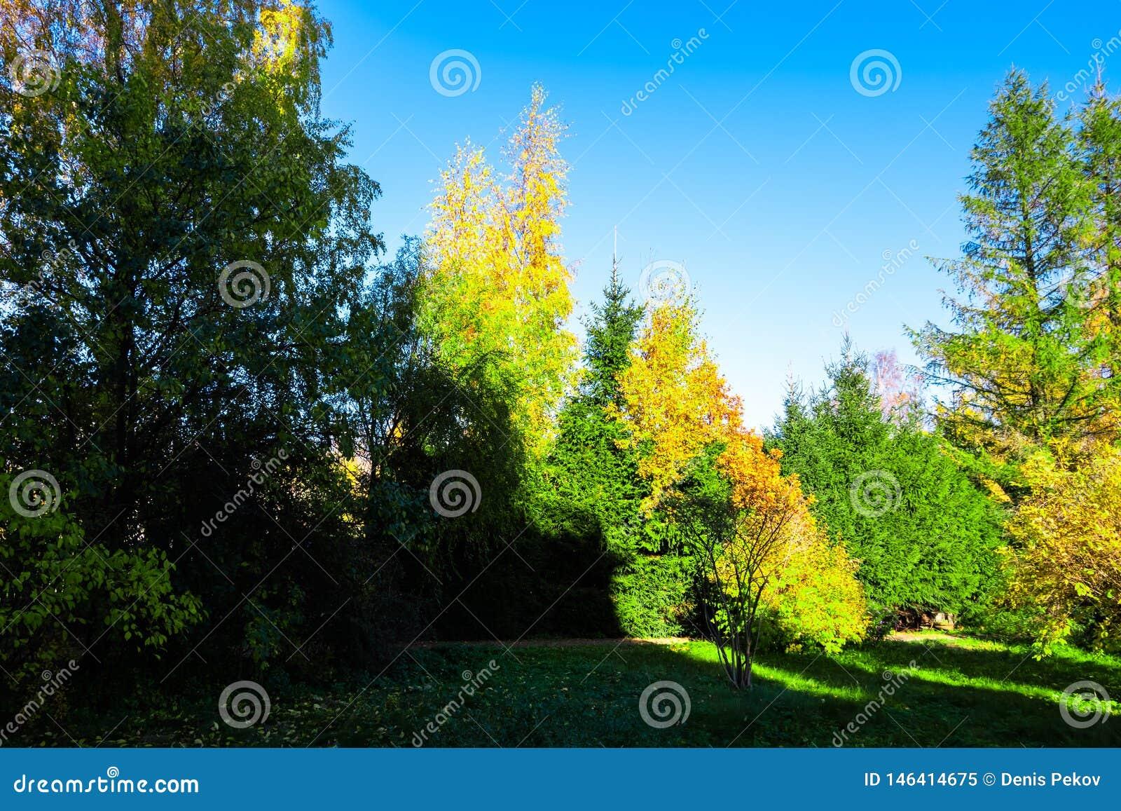 foto de Arbres d'automne en parc image stock. Image du forêt - 146414675
