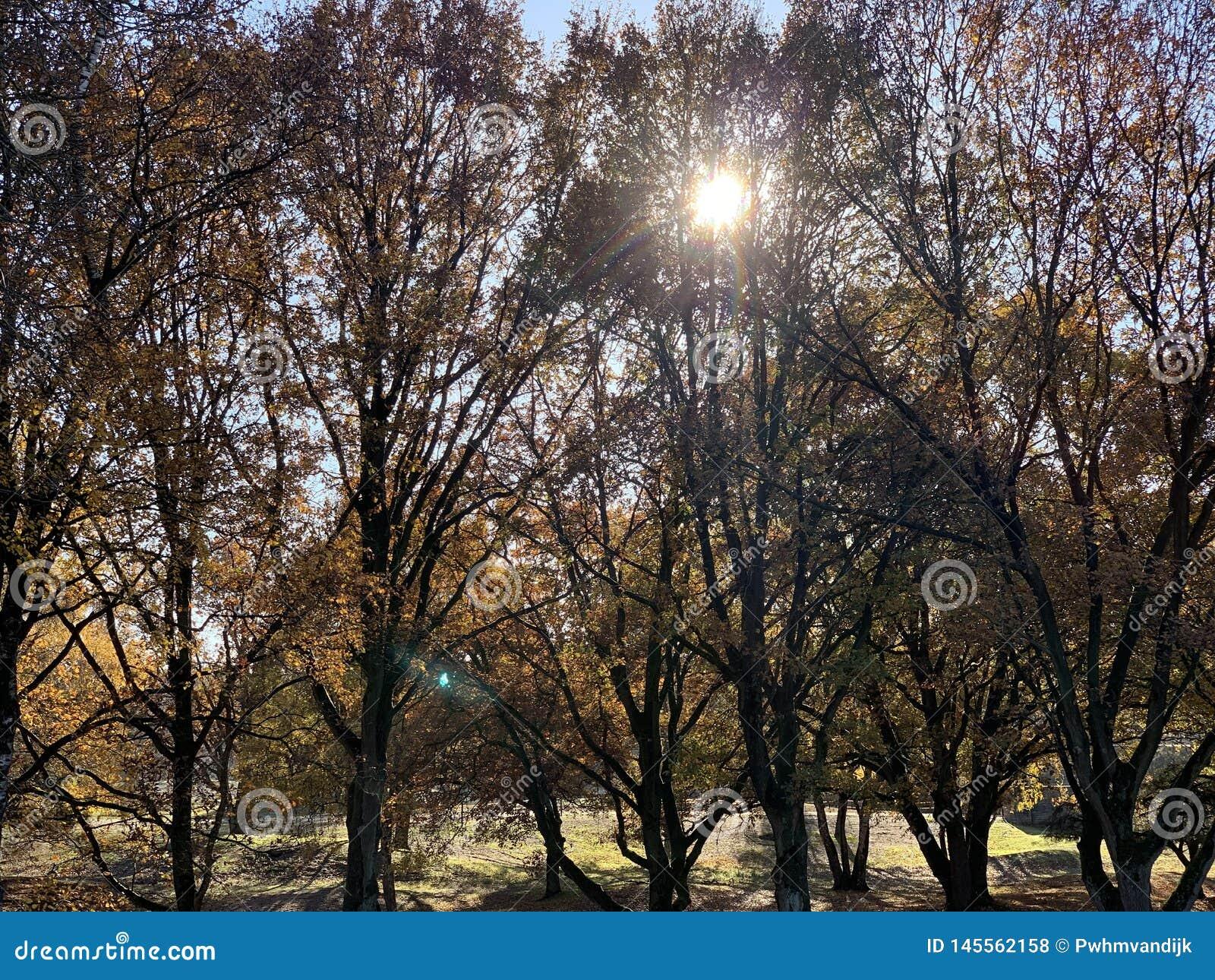 Arbres d automne un jour ensoleill?