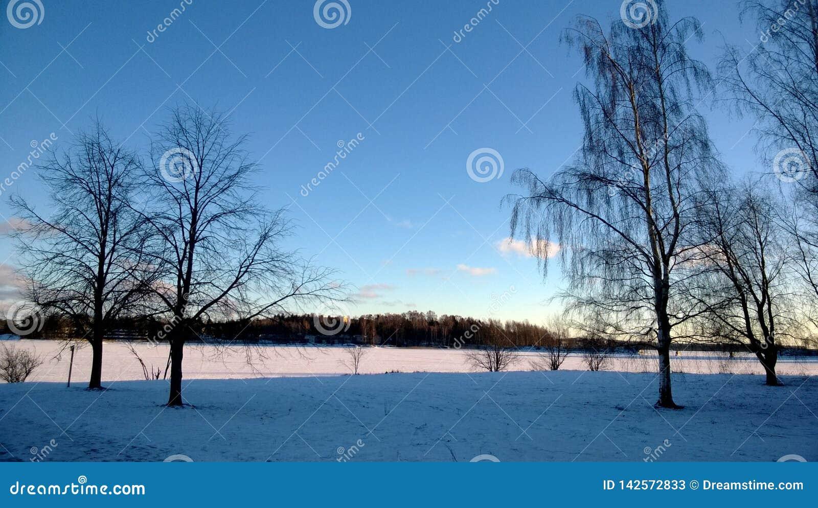 Arbres d hiver dans Otaniemi Espoo, Finlande en janvier 2014