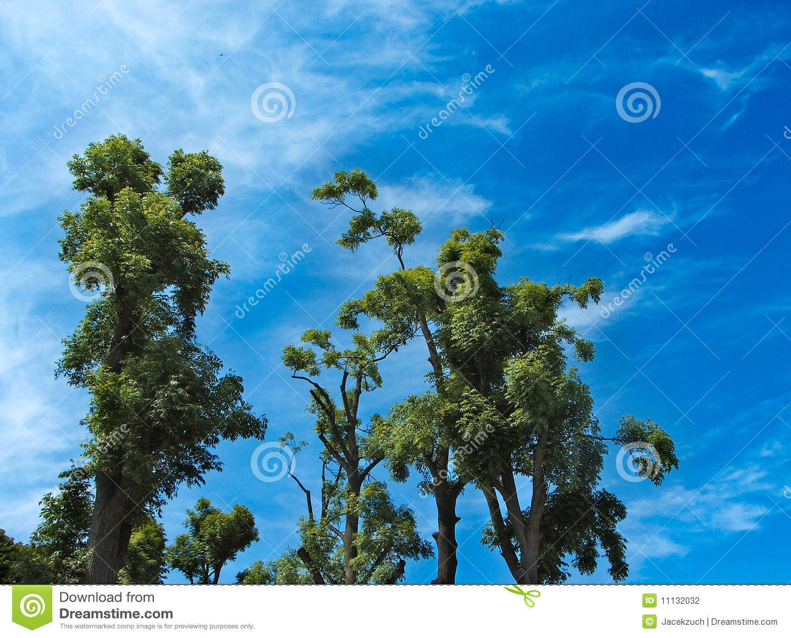 Arbres Dans Le Ciel Photographie Stock Image 11132032