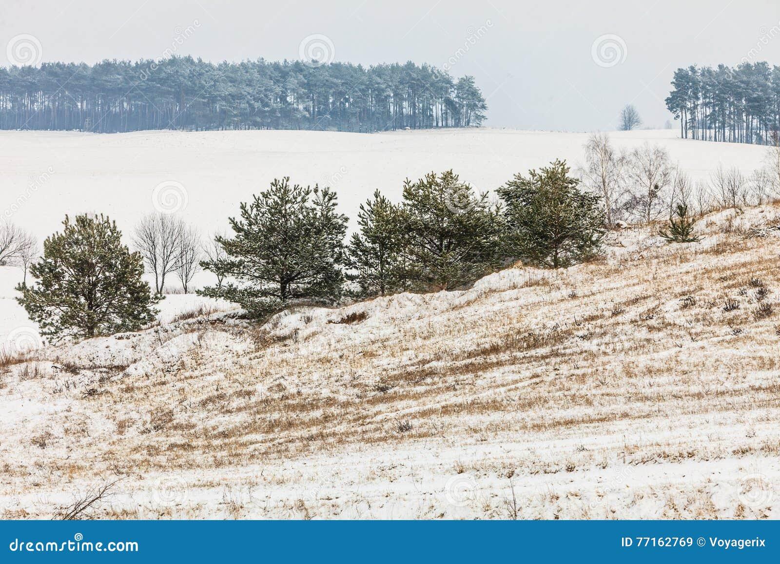 Arbres dans le domaine couvert par la neige Paysage de l hiver