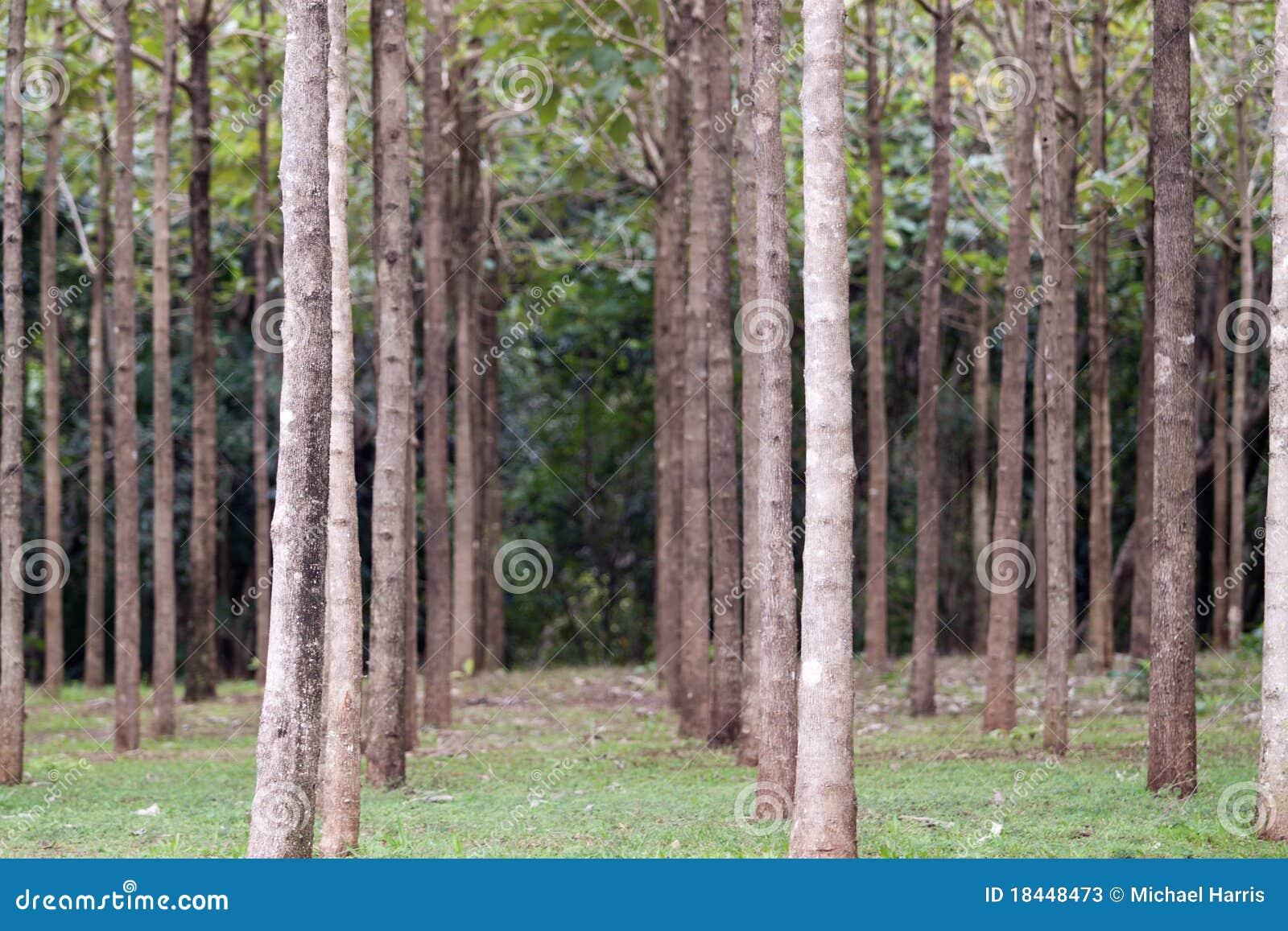 arbres de bois dur dans une ligne photos stock image 18448473. Black Bedroom Furniture Sets. Home Design Ideas