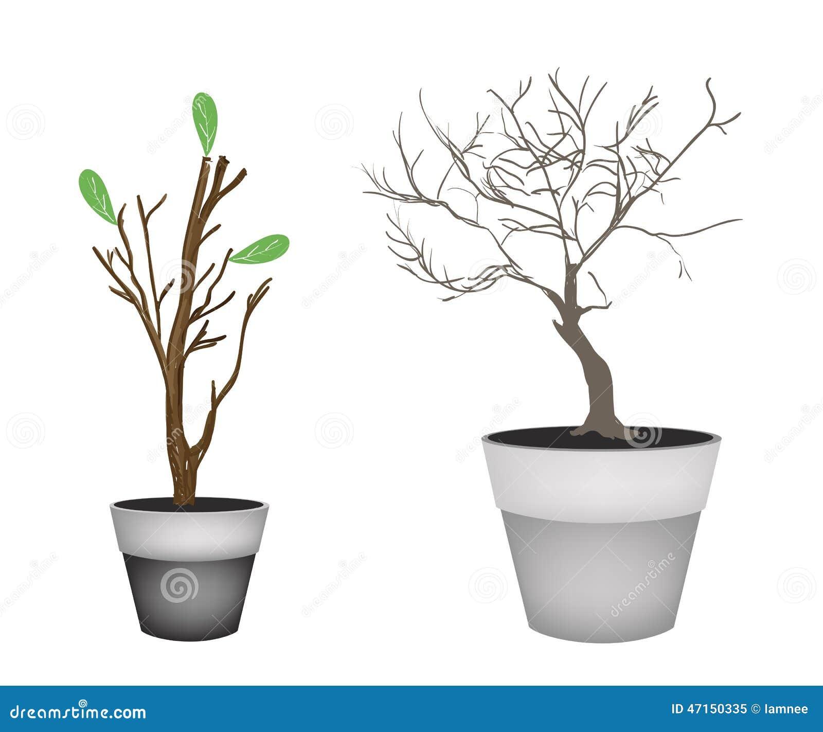 arbres de brown et bourgeons d 39 arbre dans des pots de fleur illustration de vecteur. Black Bedroom Furniture Sets. Home Design Ideas