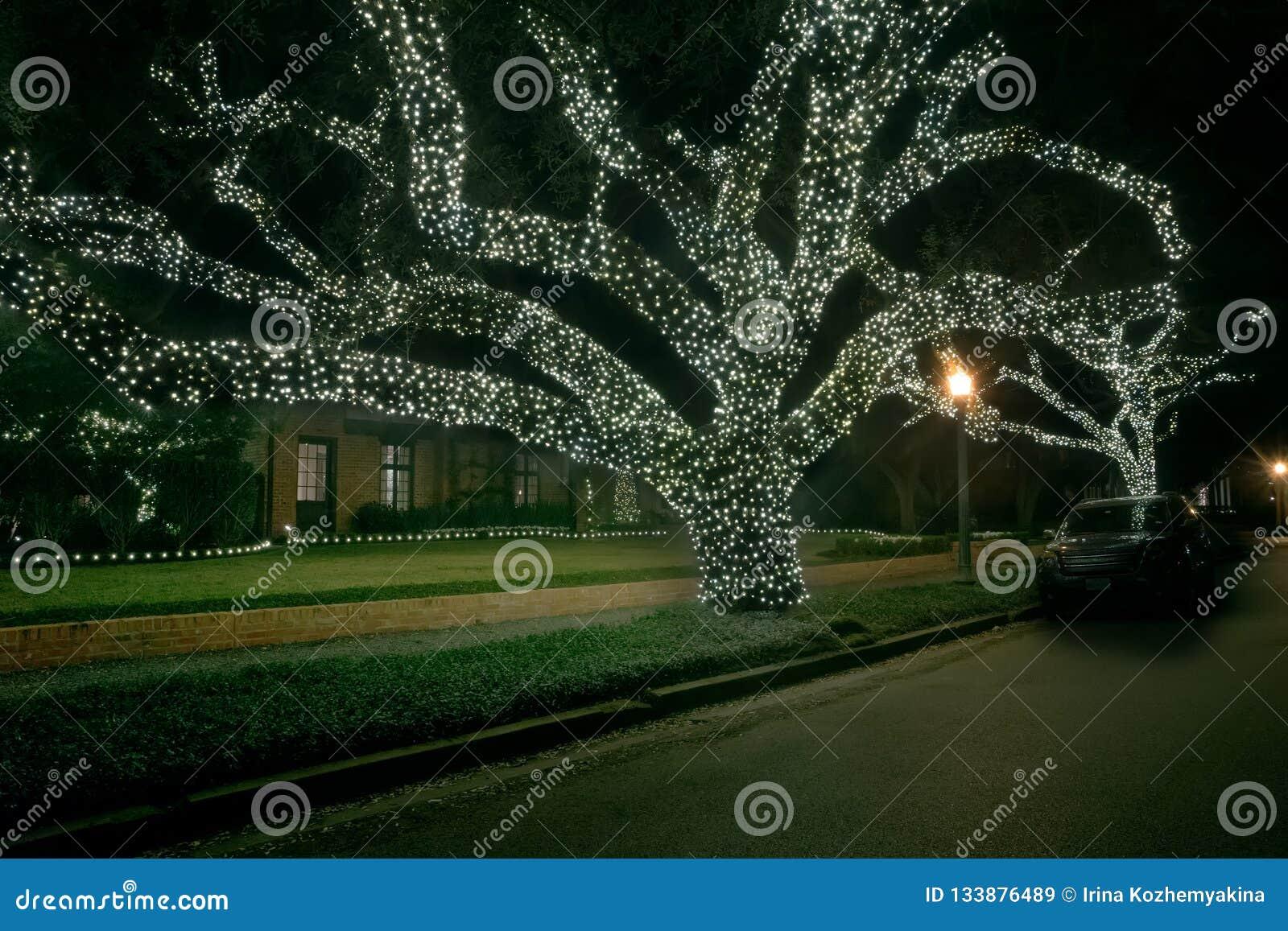 Arbres de chênes énormes dans les guirlandes de la lumière Décor de Noël Winte