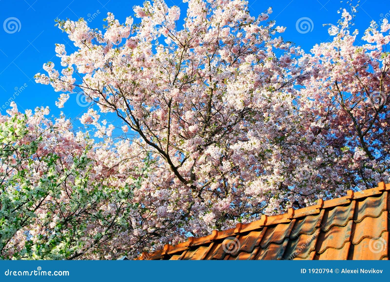 Arbres de floraison de jardin au dessus d 39 un dessus de for Arbres de jardin