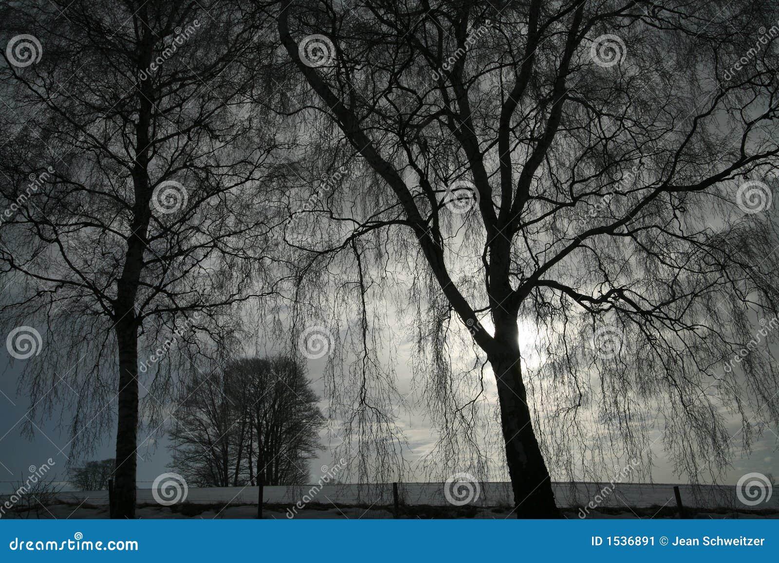 Arbres de l hiver