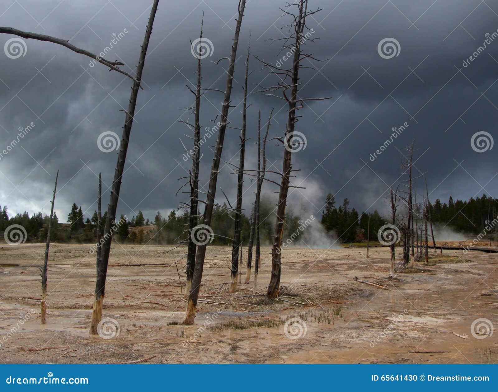 Arbres de mort dans Yellowstone